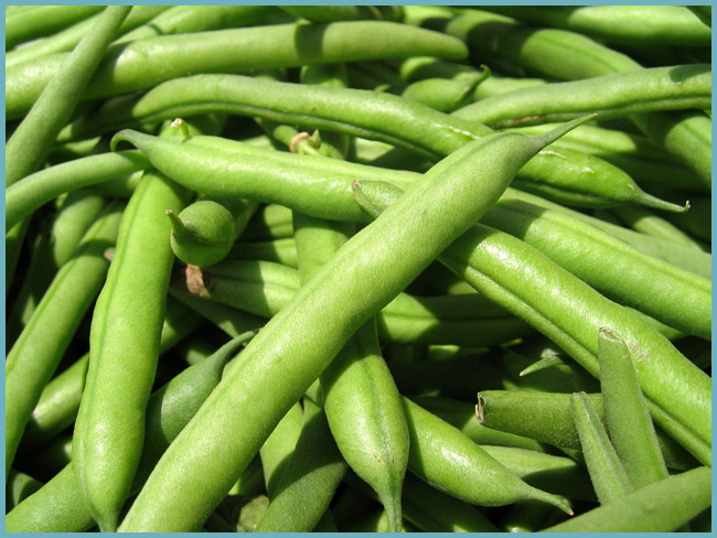 Быстрая заготовка спаржевой (зеленой) фасоли на зиму: 7 самых доступных рецептов