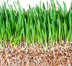 Вермикулит для растений и рассады