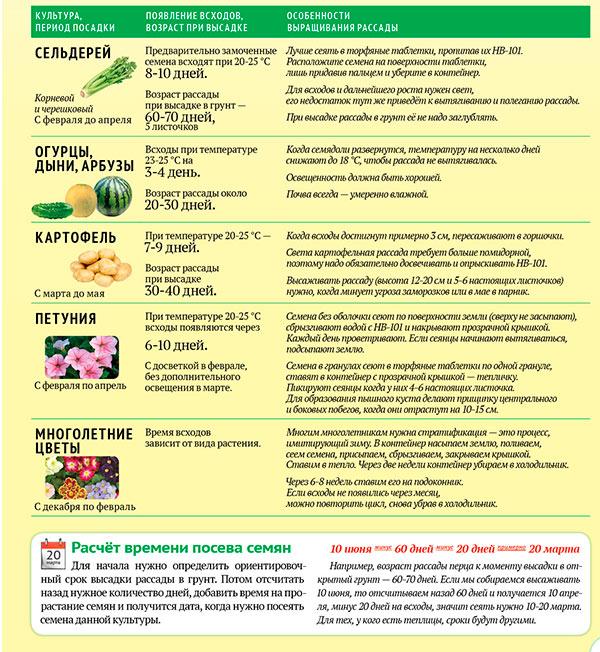 Сроки и особенности выращивания рассады