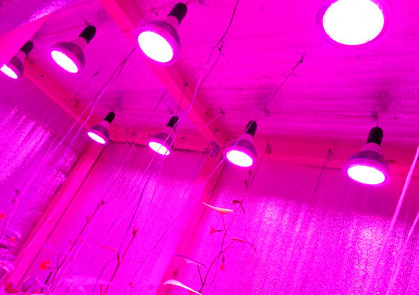 Досвечивание рассады светодиодными лампами