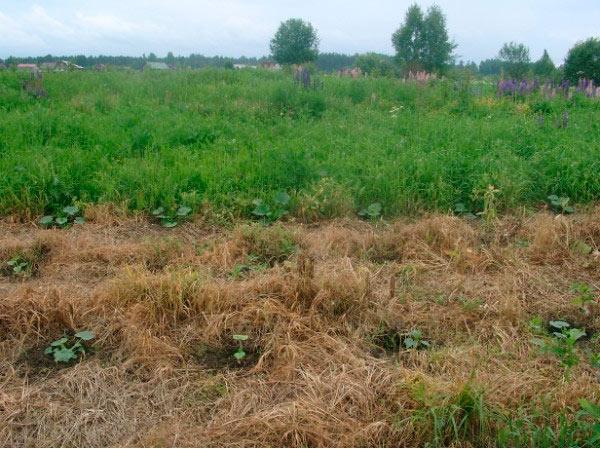 Применение гербицида Торнадо