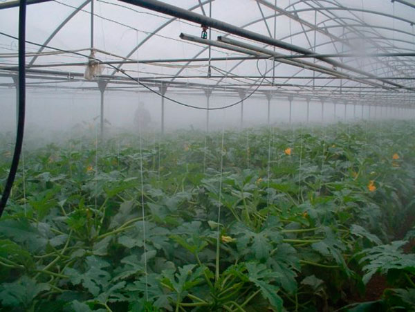 Туманообразователь в теплице