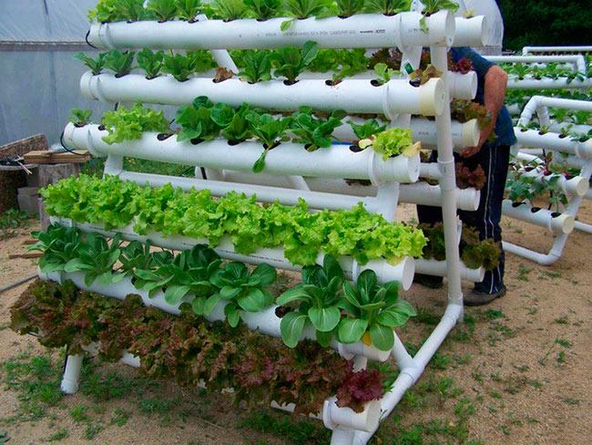 Вертикальные грядки с салатом