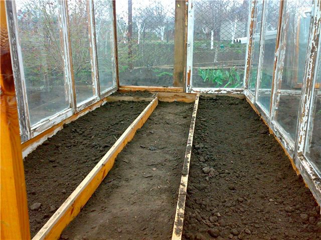 Создать в одной теплице условия для роста баклажан и огурцов достаточно сложно