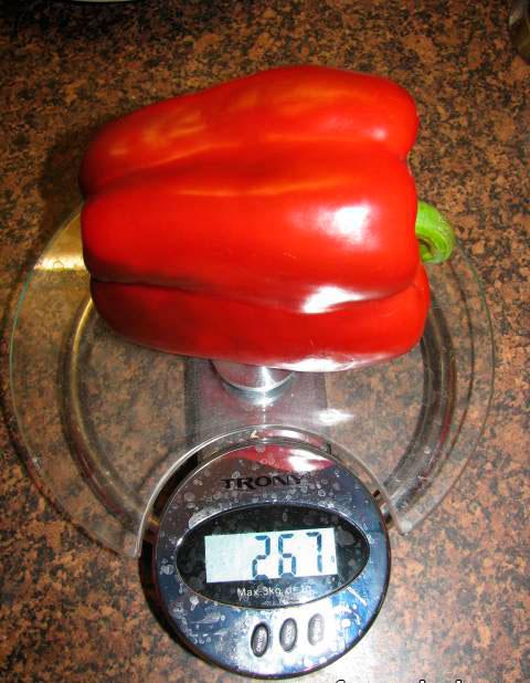 С 1 кв. м. можно собрать до 13 кг перцев