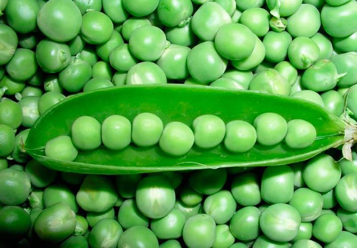 Как консервировать и мариновать зеленый горох