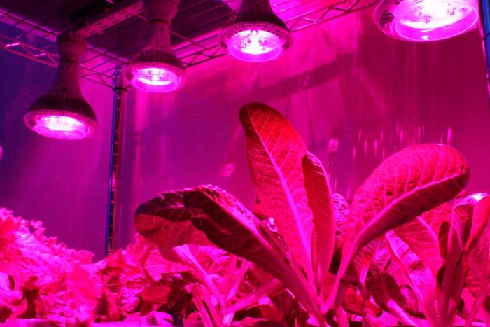 Какое освещение должно быть в теплице для выращивания огурцов, помидоров, и салата » eТеплица