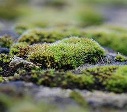 Зеленая земля в теплице