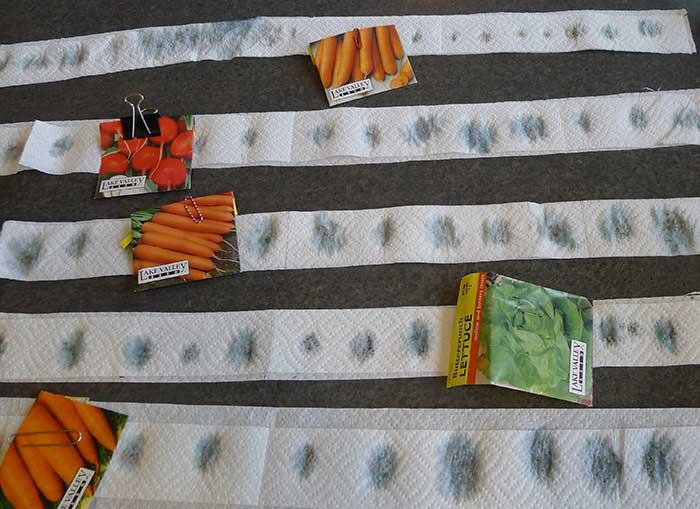 Как замачивать семена моркови перед посадкой