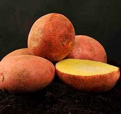 """Картофель """"Журавинка"""""""