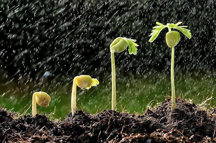 Секреты и тонкости стратификации семян: как провести в домашних условиях