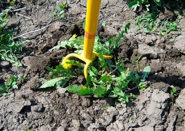 Культиватор Торнадо удаляет корни растений, так же часто его применяют для выкапывания картофеля