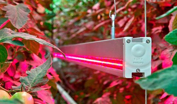 Светодиодная лампа для досветки рассады