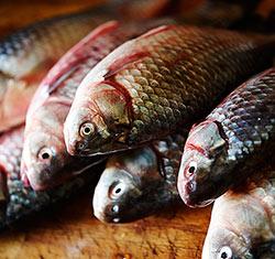 Как засолить речную рыбу