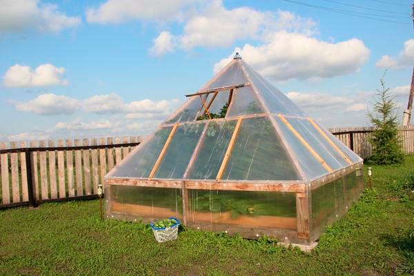 Теплица пирамида помогает получать максимум солнечного света