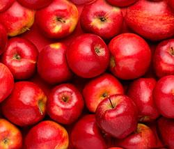 Свежие яблоки в теплице